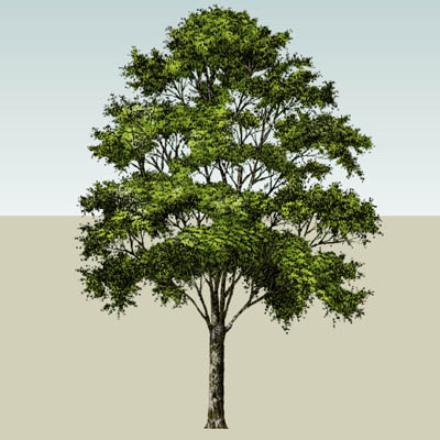 Street Tree 2 3D Model - FormFonts 3D Models & Textures