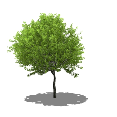 A selection of generic trees in varying foliage, s....