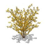View Larger Image of Forsythia