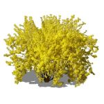 2.5D large forsythia