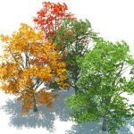 Geometrees are exactly that�plants that are largel...