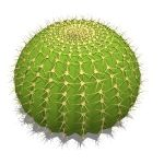 View Larger Image of Barrel Cactus