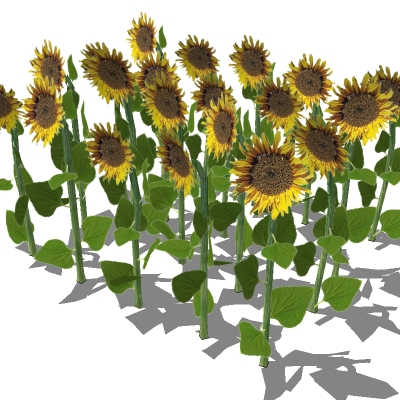 Low poly sunflower patch. Poly count is for entire....