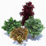 4 generic shrubs
