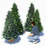 Low-poly small conifers...freestanding and in plan...