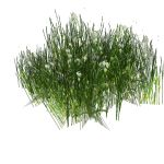 View Larger Image of FF_Model_ID13435_grass04_thumb.jpg