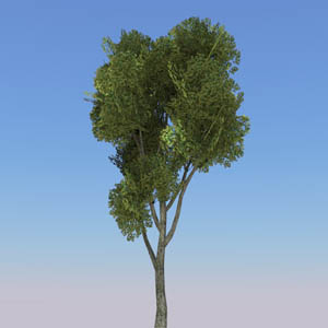View Larger Image of Generic tree 20