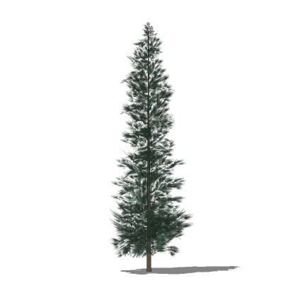 Low-poly generic conifers. These are all around 40....