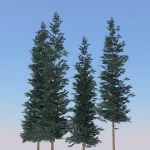 Low-poly generic conifers. These are all around 40...
