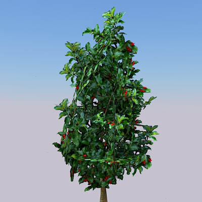 3 configurations of Holly bushes...4ft 6ft and 12f....