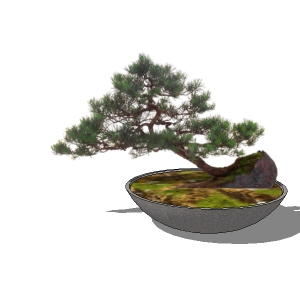 View Larger Image of Bonsai 02