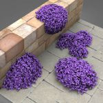 A selection of aubretia, suitable for 