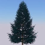 Generic fir tree
