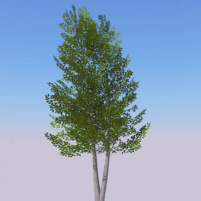 Generic deciduous tree in a variety of seasons.