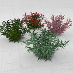 Small generic shrubs