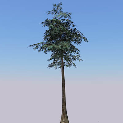 A selection of 4 low-poly Bald or Swamp cypress (T....