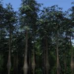 A selection of 4 low-poly Bald or Swamp cypress (T...