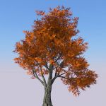 View Larger Image of HD Tree 01