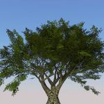 High Definition generic tree...for when nothing el...