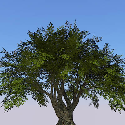 High Definition generic tree...for when nothing el....