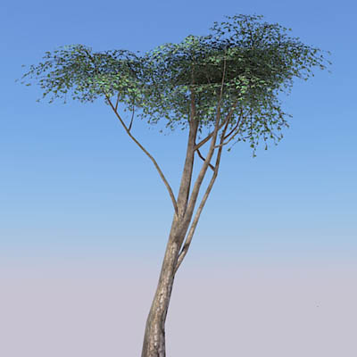 Low poly Acacia trees.
