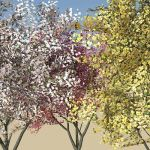 Three varieties of Flowering Dogwood (Cornus Flori...