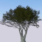 Higher poly generic tree, for when nothing else wi...