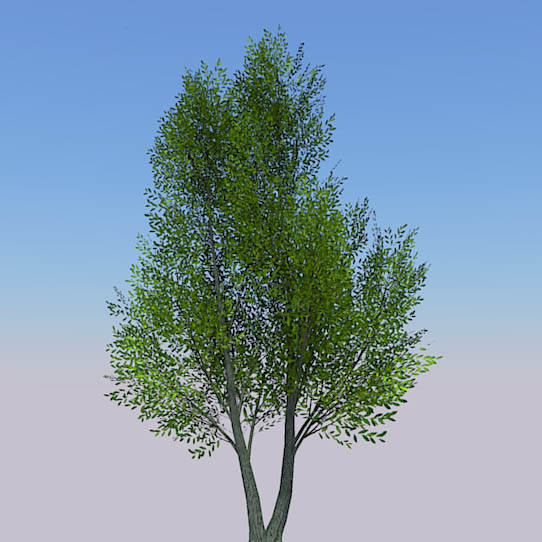 Generic tree with seasonal variations.