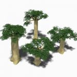 Four baobab trees, ranging approx. from 40' to 80'...