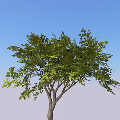 Small generic tree (9-10ft) with 4 seasonal variat....