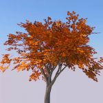 View Larger Image of Generic tree 31