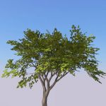 Small generic tree (9-10ft) with 4 seasonal variat...