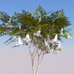 Three configurations of Brugmansia (Angel's Trumpe...