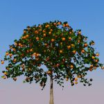 Orange tree in the Geometree 