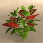 View Larger Image of Large Poinsettia