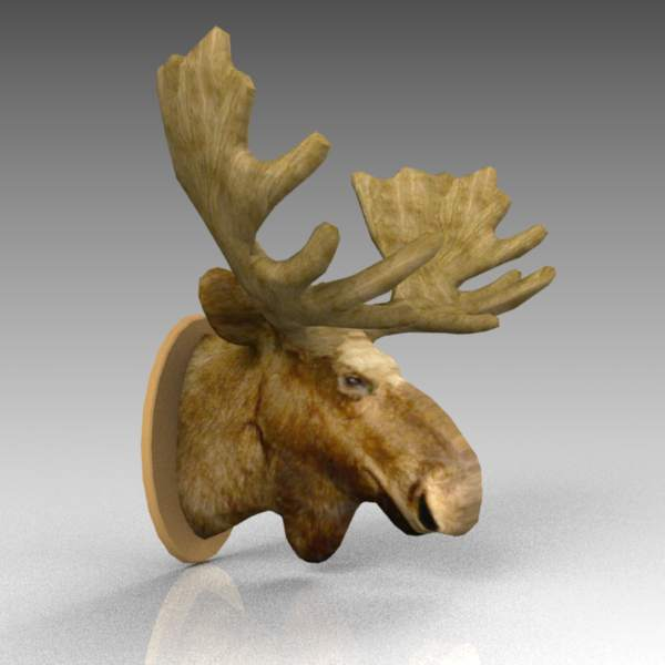 A mounted moose head.