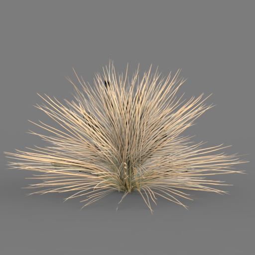 Carex Bronzina (low poly model).