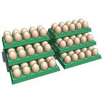 Eggs in pack (10 pcs).