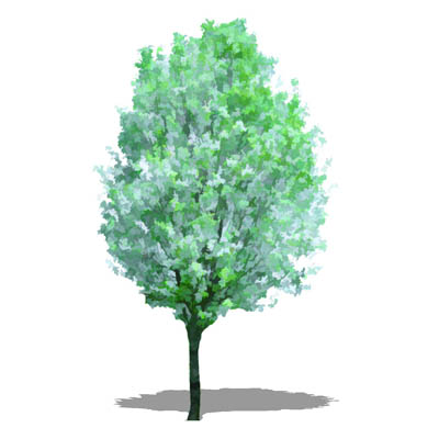 NPR non-specific deciduous tree in spring foliage,....