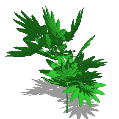 Generic, low-poly houseplant/tropical garden plant.