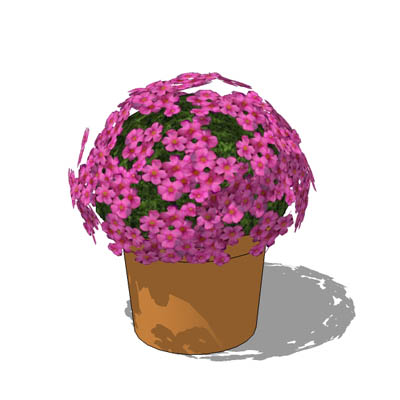 Low-poly Oxalis glabra in pot..