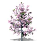 Series of young ornamental cherry trees in Blossom...