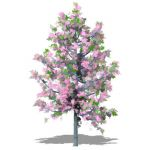 Variety of taller cherry trees in Spring and Autum...