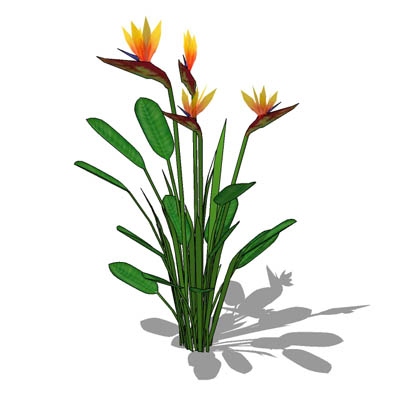 Low-poly Bird of Paradise plant (Strelitzia regina....