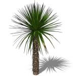 View Larger Image of 1_yucca_soaptree_3D01.jpg