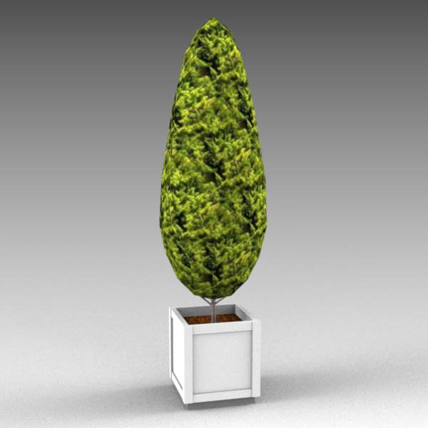 Low polygon cypress in planter.