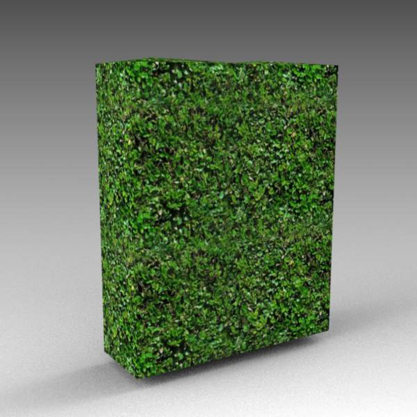 A 6ft / 2m high hedge module with slightly uneven ....
