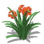 View Larger Image of FF_Model_ID5024_clivia_miniata.jpg