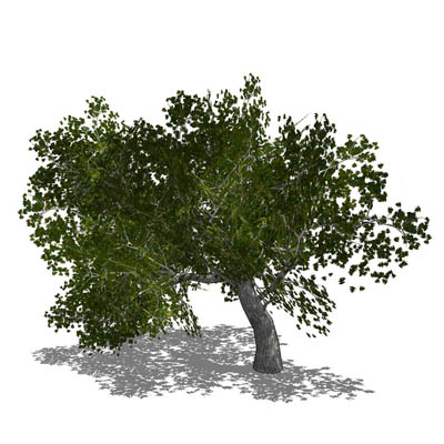 Large generic old tree in 4 variants. It will stan....