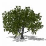 Generic deciduous tree in 4 configurations, includ...